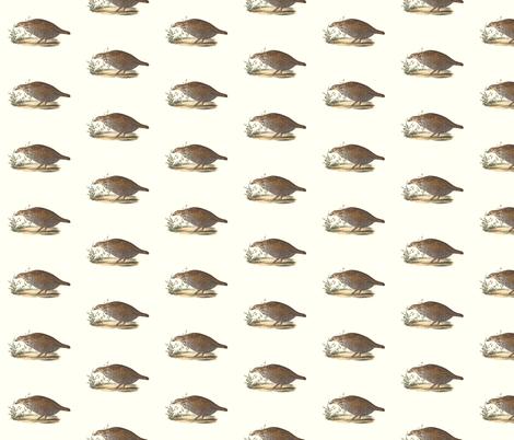 The Pinnated Grouse - Bird / Birds fabric by zephyrus_books on Spoonflower - custom fabric