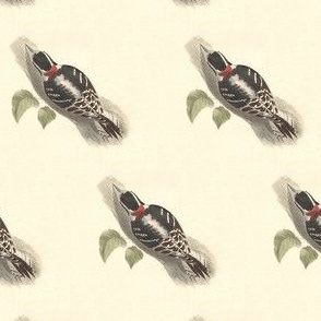The Downy Woodpecker - Vintage Bird / Birds Print