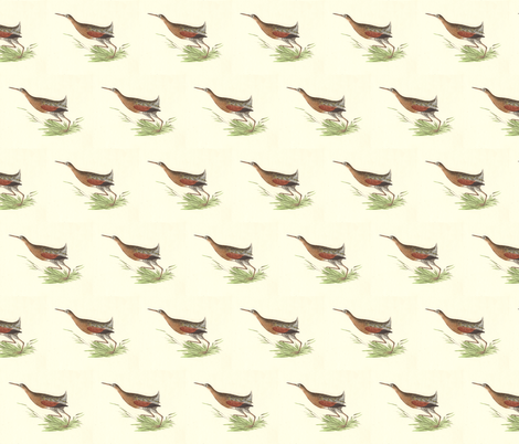 The Saltwater Meadow-hen - Bird / Birds fabric by zephyrus_books on Spoonflower - custom fabric