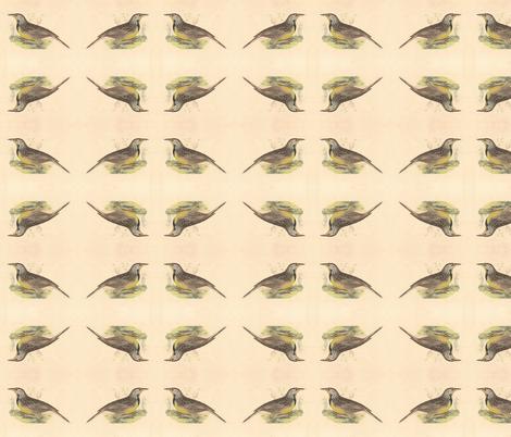 Eastern Meadowlark - Bird / Birds fabric by zephyrus_books on Spoonflower - custom fabric