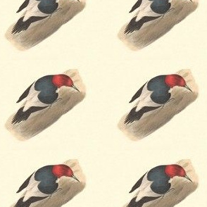 The Red-headed Woodpecker - Vintage Bird / Birds Print