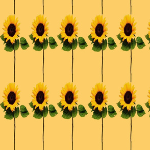 SUNFLOWER STRIPES