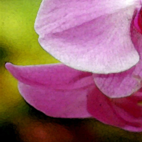 pink orchid 42 x 36