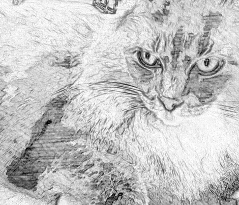 cat sketch fabric by paulamarie on Spoonflower - custom fabric
