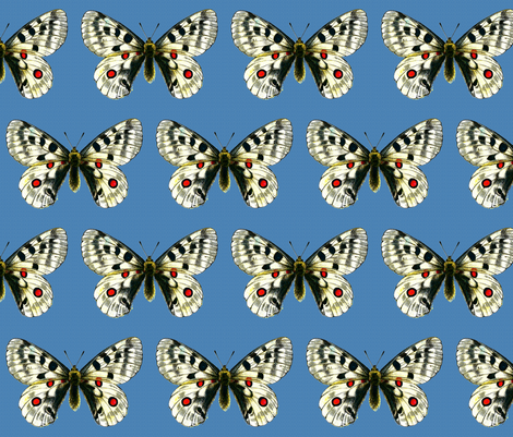 Butterfly Parnassius apollo fabric by zephyrus_books on Spoonflower - custom fabric