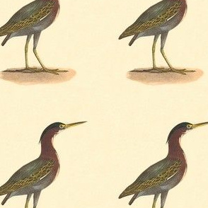 The Green Heron, or Poke - Vintage Bird / Birds Print