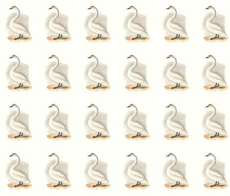 The American Swan - Vintage Bird / Birds Print fabric by zephyrus_books on Spoonflower - custom fabric