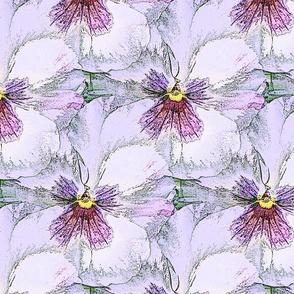 Pale lavender pastel pansy