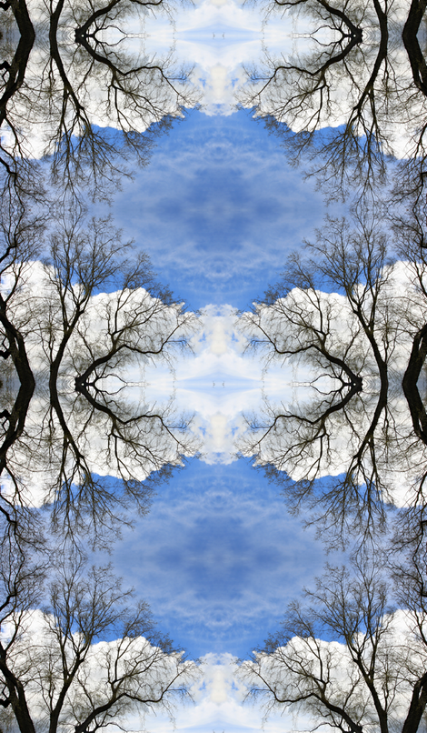 Tree against sky fabric by studiostitches on Spoonflower - custom fabric