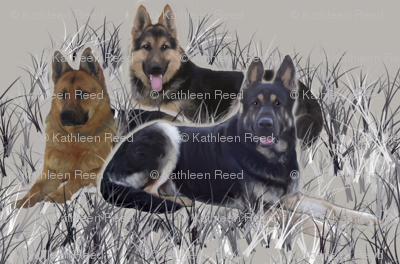 German Shepherds In The Grass