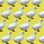 Rrrrrwhite_duck_on_yellow_shop_thumb