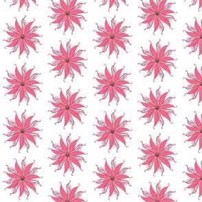Zebra_flower_Solo__pink_
