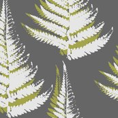 Rrferns_shop_thumb