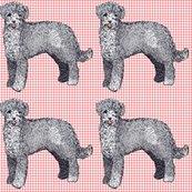 Rrrportuguese_waterdog2_shop_thumb