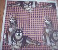 Rrrsiberian_huskies2_comment_163576_thumb
