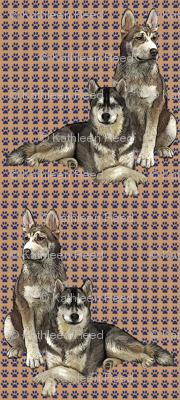 Siberian Huskies Two