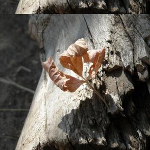 sunshine_leaf