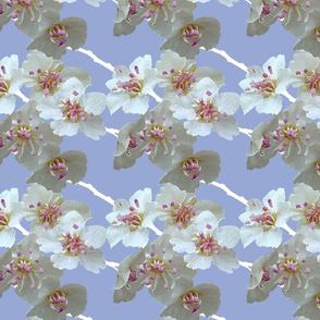 blossoms_blue