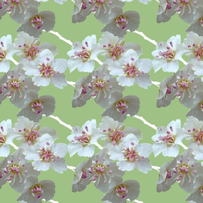 blossoms_green