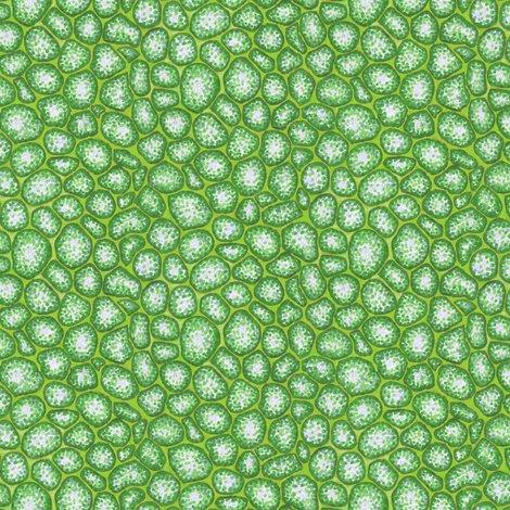 Rrrrmicroscope-plantcells2b_shop_preview