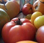 Rrrfruit_shop_thumb