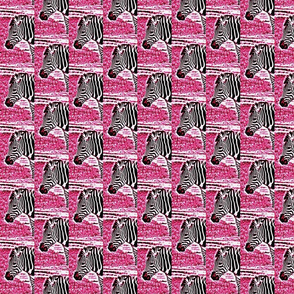 zebradrama-pinky