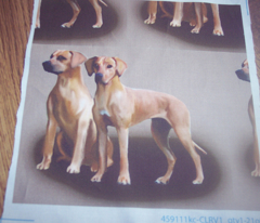 Rhodesan ridgeback three