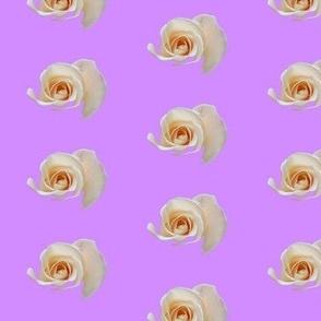 Rose on Light Purple