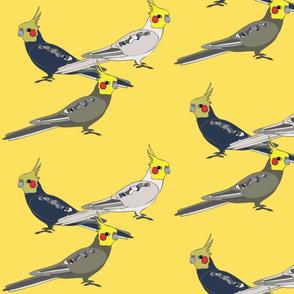 Cockatiels - Yellow