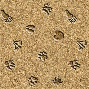 Animal Tracks In Sand Wallpaper