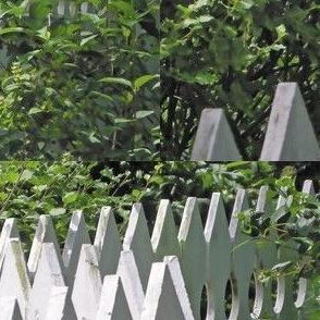 White Picket Fence Zigzag, L