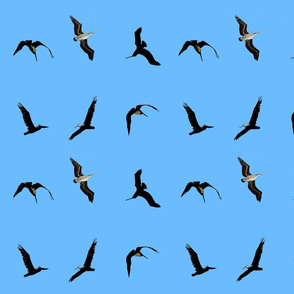 flying pelicans on pale blue