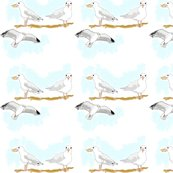Rrseagulls2_shop_thumb