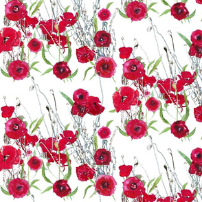 watercolor red poppy field on white