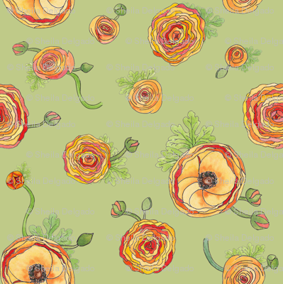 Ranunculus - Celadon