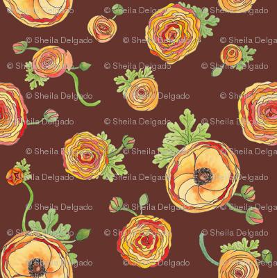 Ranunculus - Chocolate