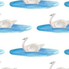 Swan in a blue pool