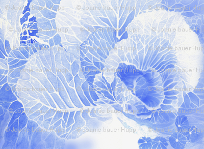 BAUER - Blue Cabbage