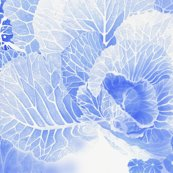 Rrrbauer-blue_cabbage_shop_thumb