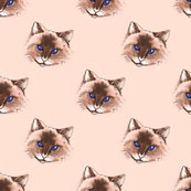 Rrrblue_eyed_cat2bcd_seal_face_signed_shop_thumb