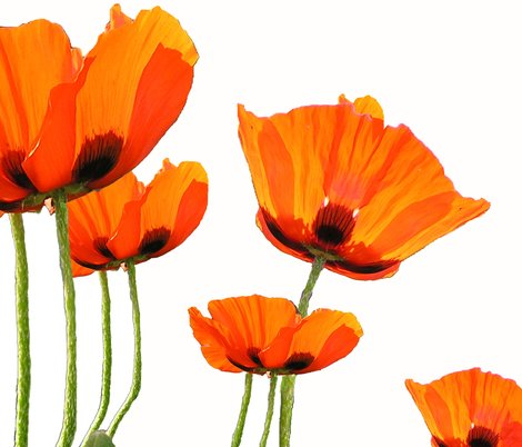 Rrlamp_poppies2_shop_preview