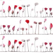 Rrrpoppies_pods_shop_thumb