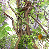 Wisteria Warbler Whippoorwill 2
