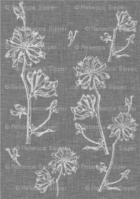 Chicory on Light Charcoal