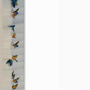 Macaw border on white