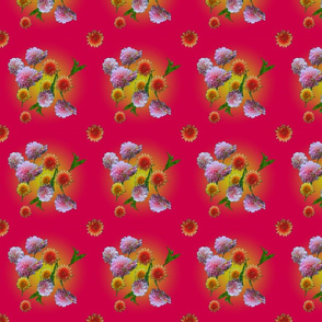 Rose dahlia little 9