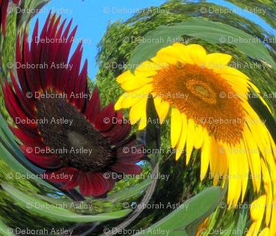 Dizzy Sunflowers
