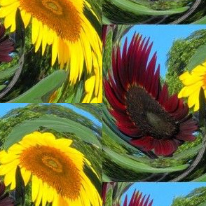 Dizzy Sunflowers