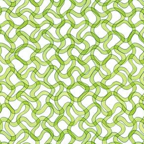 spirulina cyanobacteria in green