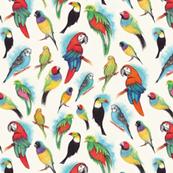 Rrrrrrrrnoisy_birds_shop_thumb